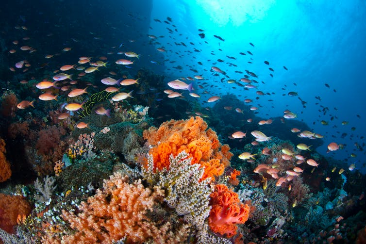 A school of fish surrounds a tropical coral reef.